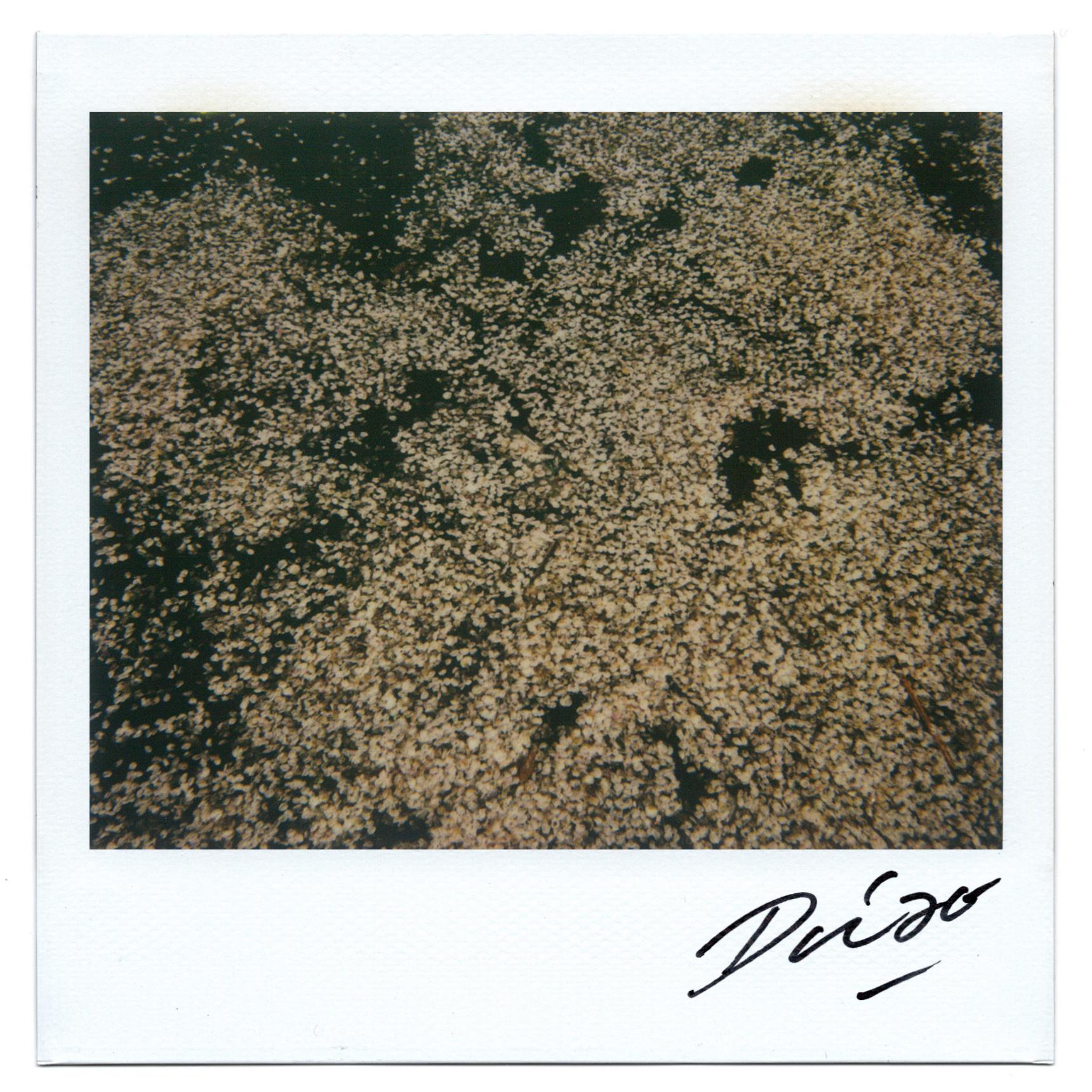Moriyama Daido, bye-bye polaroid, 2008, Polaroid, 10 x 10 cm10