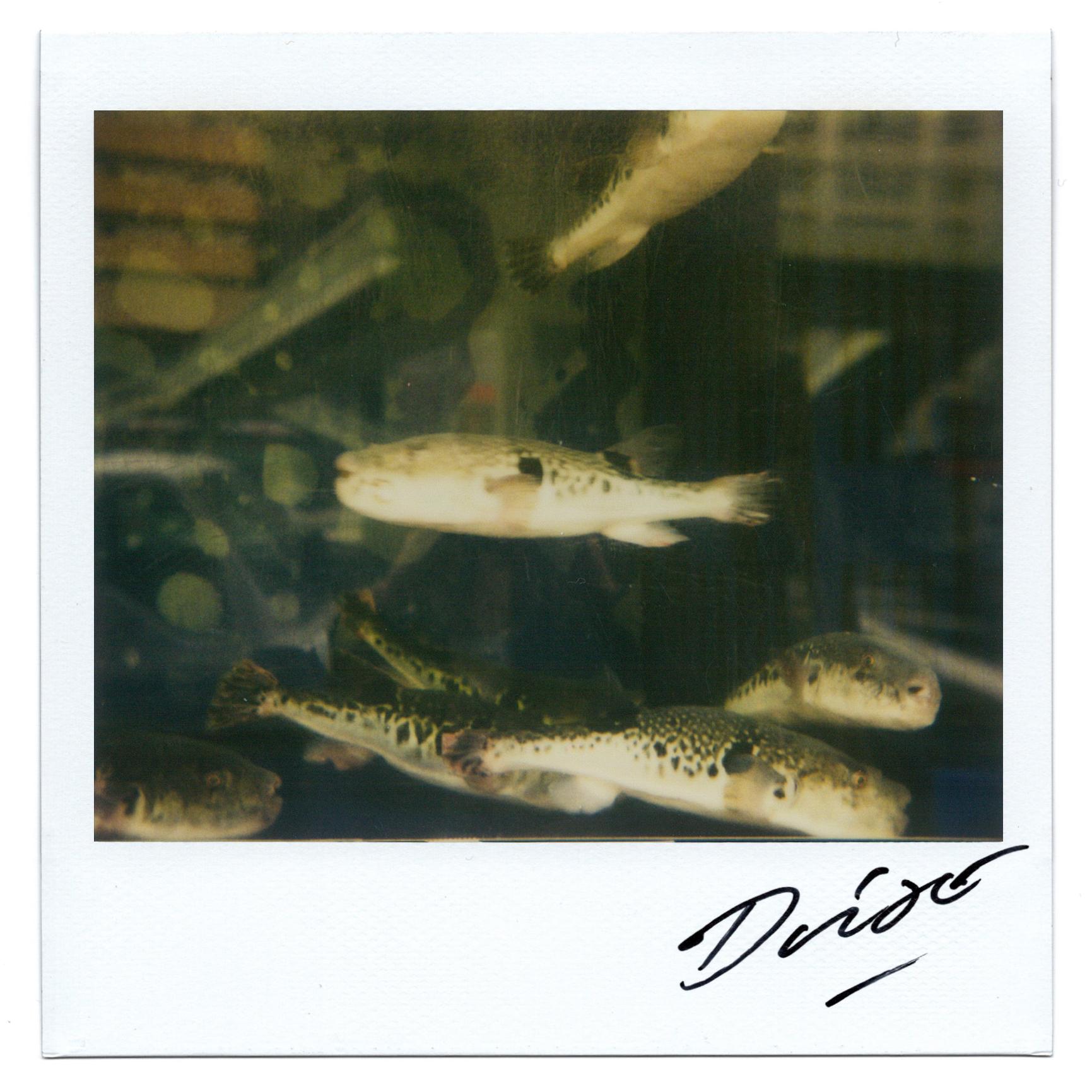 Moriyama Daido, bye-bye polaroid, 2008, Polaroid, 10 x 10 cm12