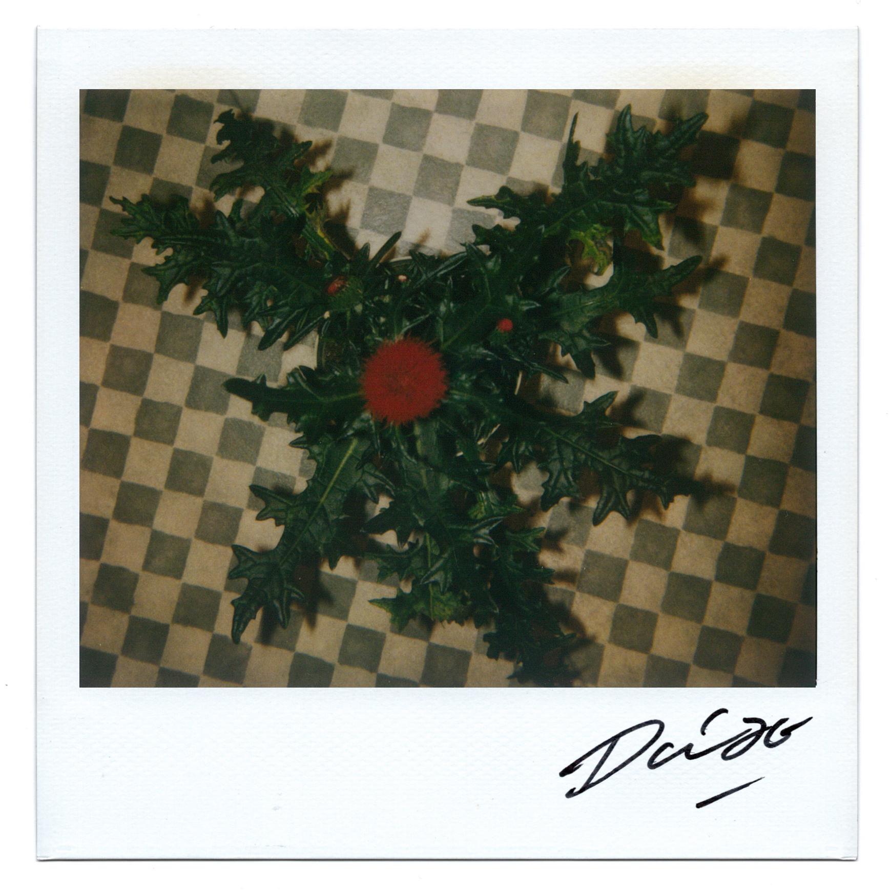 Moriyama Daido, bye-bye polaroid, 2008, Polaroid, 10 x 10 cm4