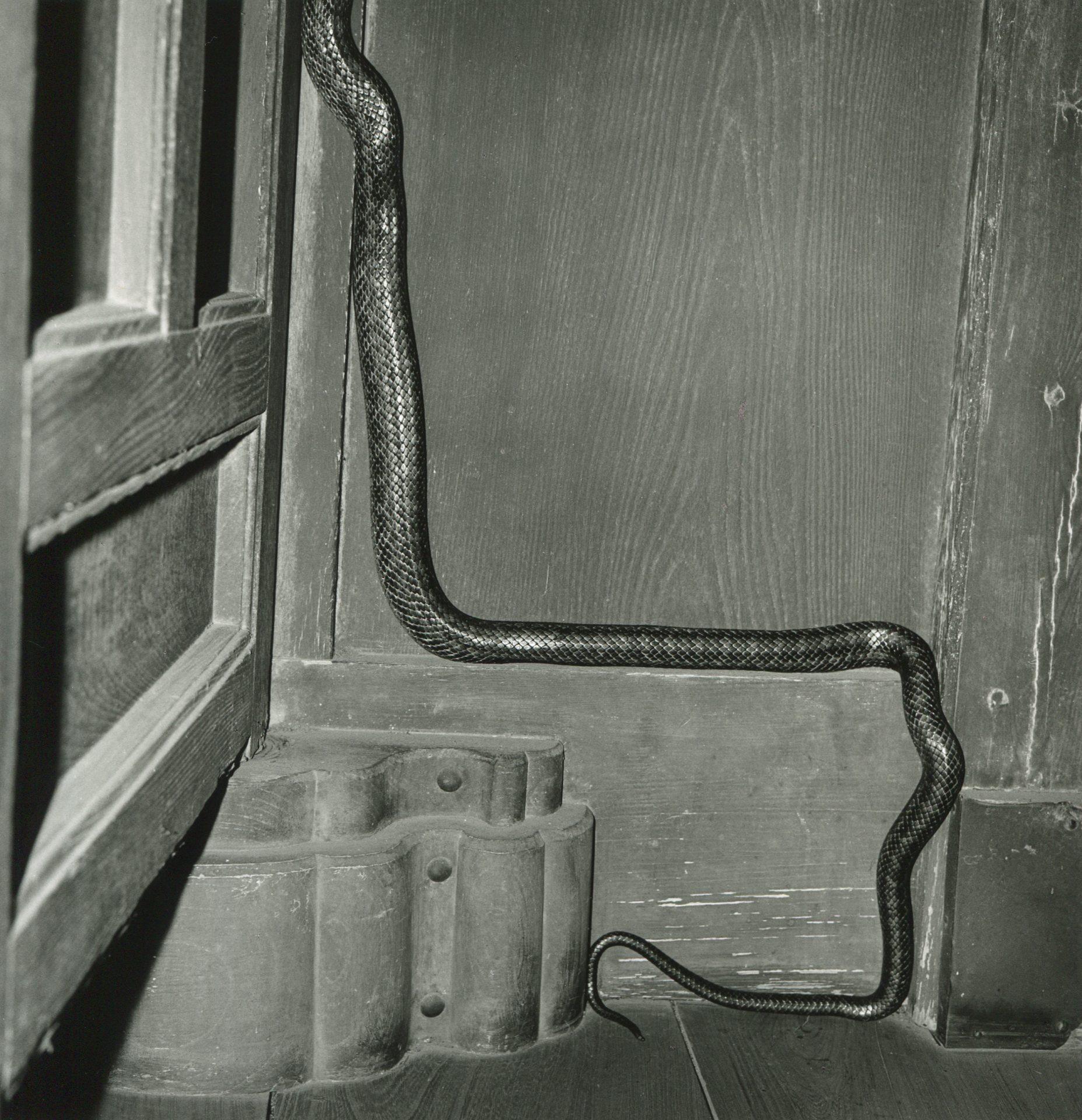 亞紀選 須田一政 Suda Issei 風姿花傳 Fushikaden 1975 銀鹽照片 gelatin silver print paper size 31x25 cm image size 35x35 cm vintage